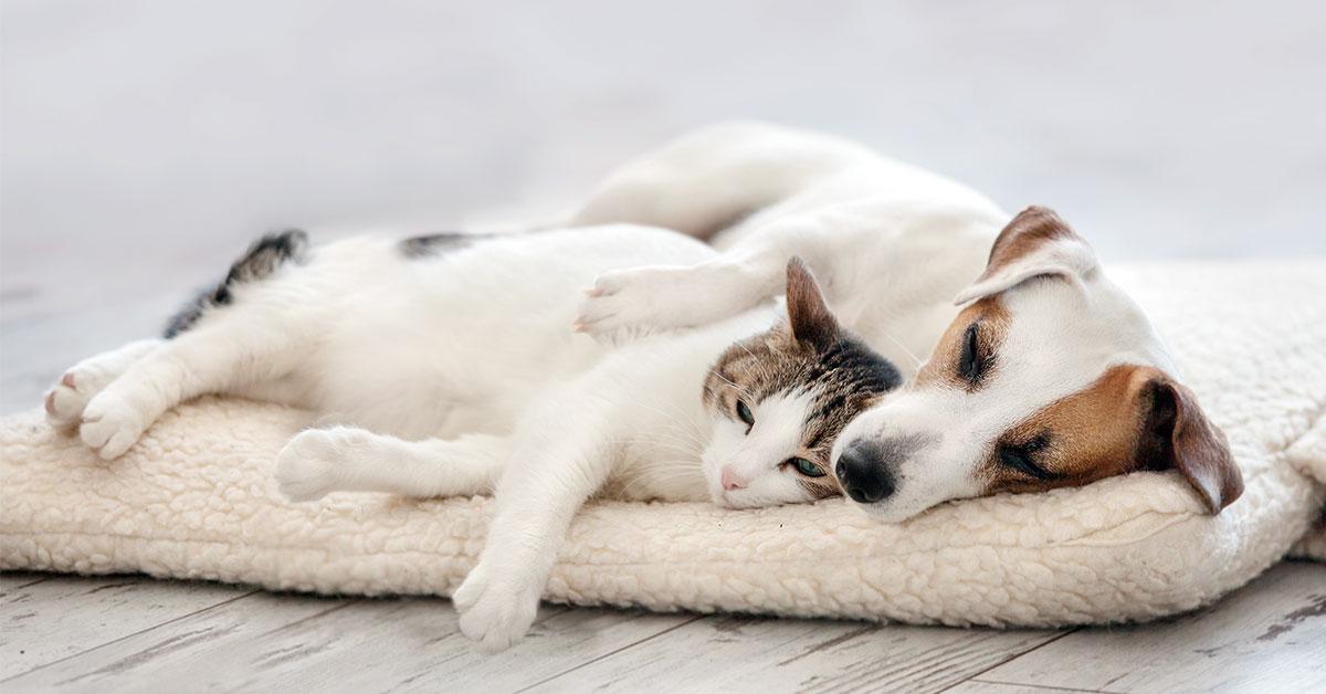 Kutya és macska fekhelyek