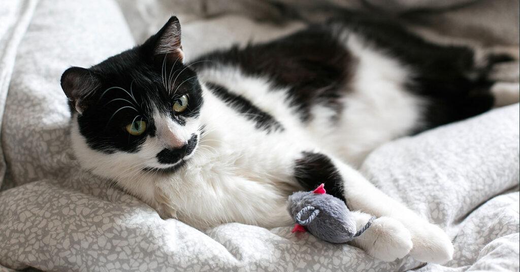 Macska játékok és felszerelések