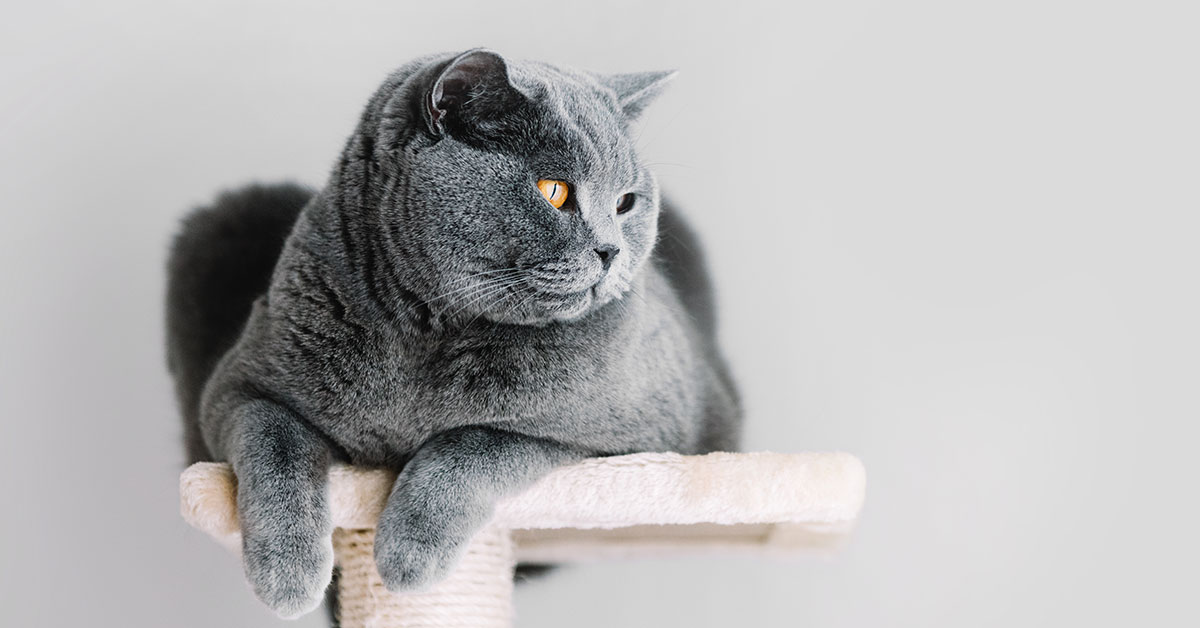 macskabutorok